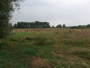 Weidefläche mit Naturschutz